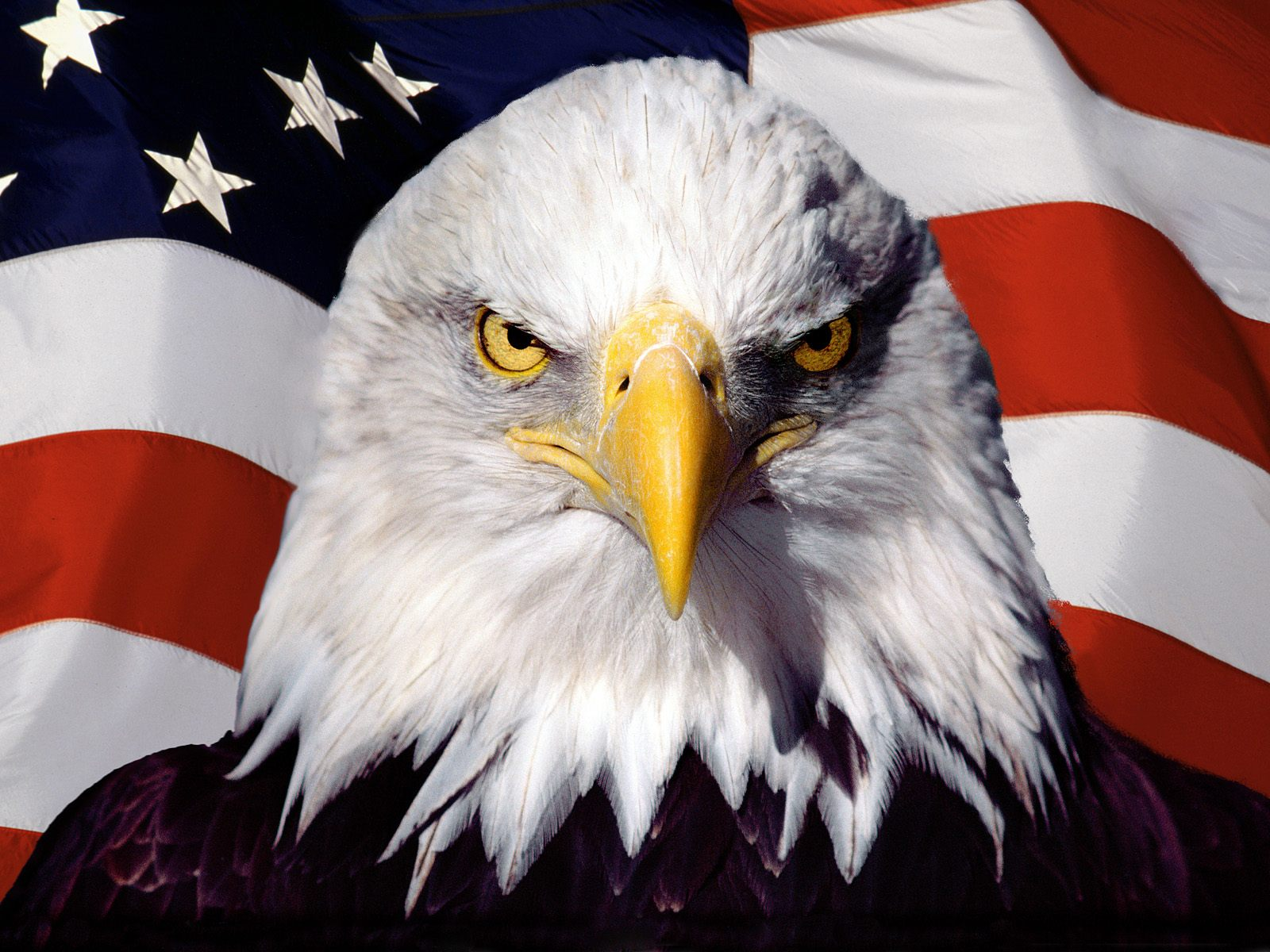 Eagle-Patriot.jpg